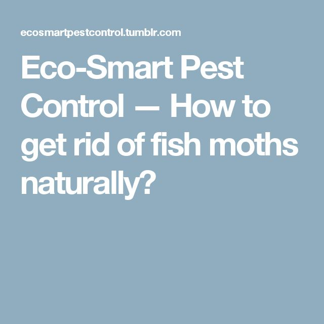 Eco-Smart Pest Control — How to get rid of fish moths naturally?