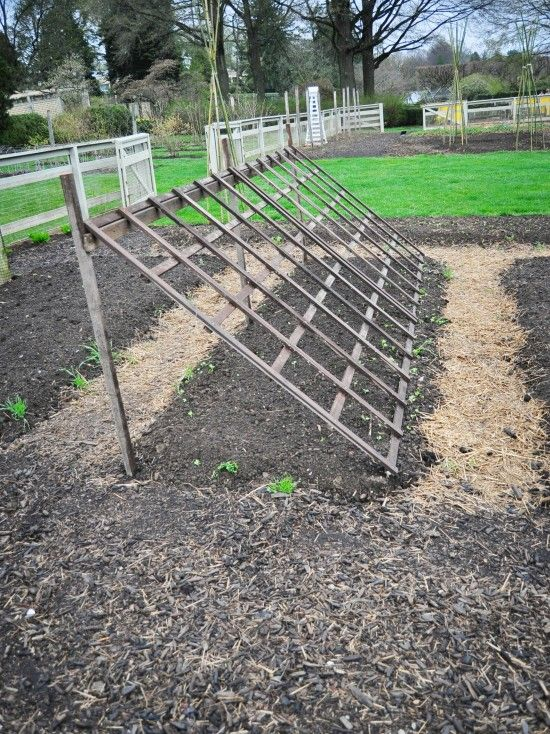 """This trellis is a good solution for heavier climbers such as squash and watermelon because of its thickness and strength of the wood panel. Once the vines start climbing the trellis, they provide shade for lettuces underneath."""