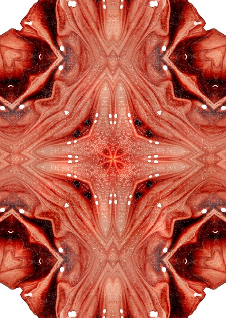 cardinalis