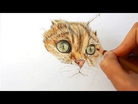 How to draw fur with colored pencils - cat | Emmy Kalia - YouTube