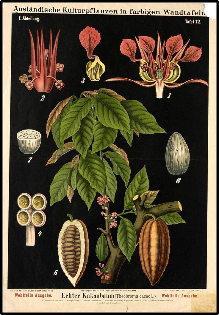 Ausländische Kulturpflanzen in farbigen Wandtafeln I. Abteilung, Wohlfeile Ausgabe