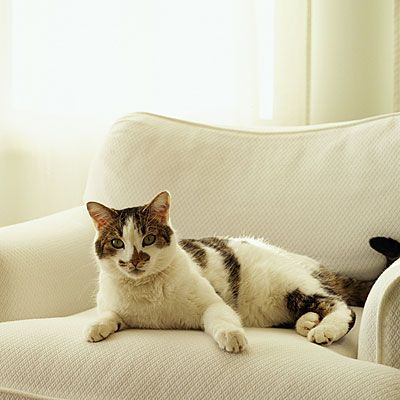 12 Ways to Beat Cat Allergies | health.com