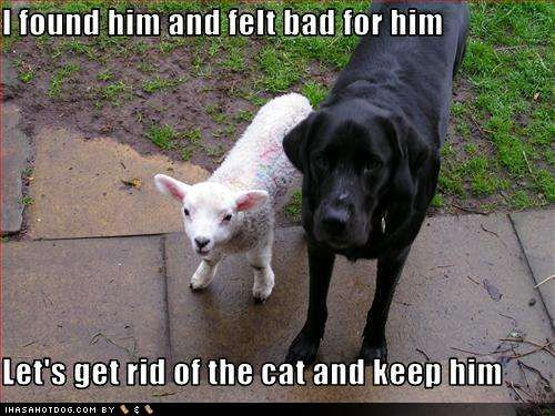 Funny Black Sheep Meme : Best sheep fun images sheep funny pics and