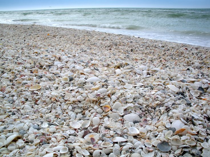 Shelling on Marco Island, Florida