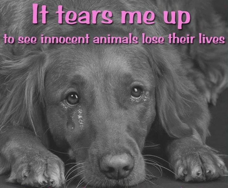 109 Best Animals Images On Pinterest: 109 Best No Kill Animal Shelters Revolution Images On