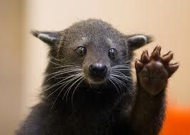 You've learned that a Bearcat ACTUALLY looks like this… | 45 Ways You Know You Went To The University Of Cincinnati