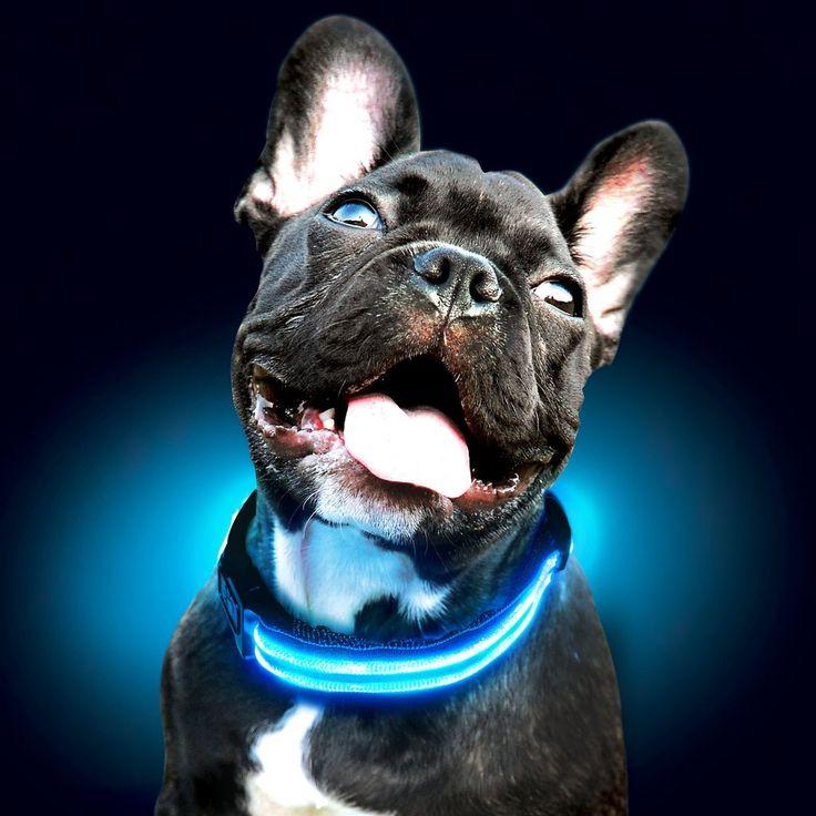 Reflective LED Dog Collar