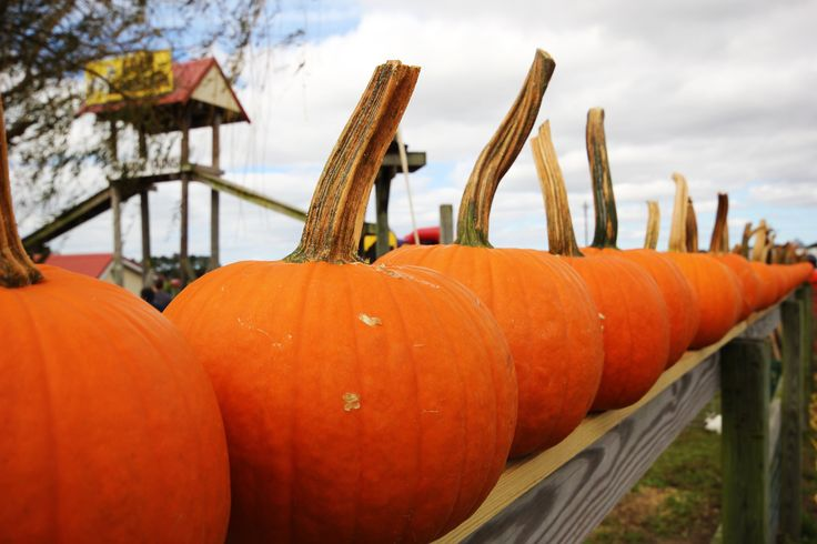 Fall adventures abound on Delmarva this time of year. We couldn't wait to get to Apple Scrapple and the Parsons Farm Fest this year. Take a look! #fall #pumpkins #autumn #events