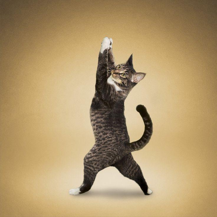 Картинки котят в смешных позах