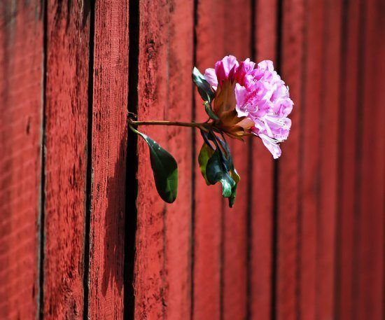 Pushing past fences  Growing Plants That Defy All Odds • Page 2 of 6 • BoredBug