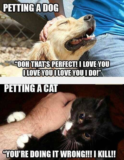 Cat vs. Dog.... too true. I've lived with both.... I' ll BAT. Fun fact: When cats show their bellies, they do not want to have their belly rubbed. They are showing that they trust you, and would probably prefer to have the - https://www.facebook.com/diplyofficial