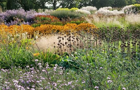 135 best sussex prairies garden images on pinterest for Grasses for garden borders