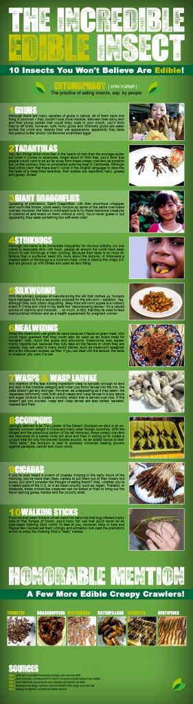The incredible Edible Insect Infographic.                                                                                                                                                                                 More
