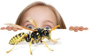 Why Building and Pest Inspection is necessary ?