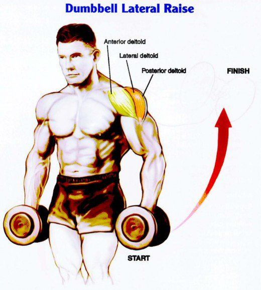 The target of this exercise is the lateral head (orange segment above) of the deltoid. Building mass in this area will increase the width of your shoulders.