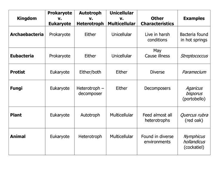 Six Kingdoms Of Life Worksheet