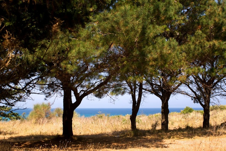 Just before arriving to the beach, going through a small pine forest.