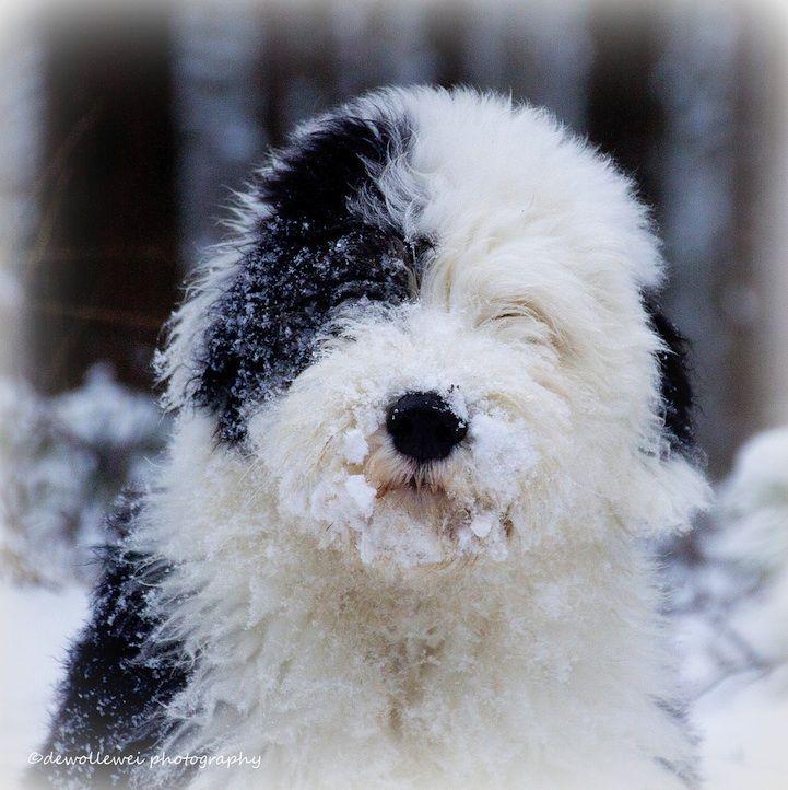 morrito con nieve
