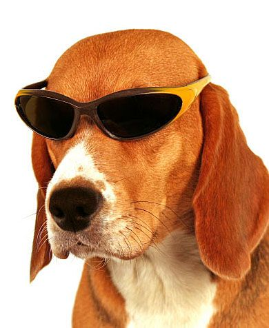 This Beagle is searching for cool dog names and thinks he's too cool to be on Pinterest. lol