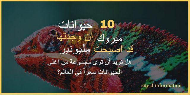10 حيوانات إن وجدتها مبروك قد اصبحت مليونير Movie Posters Lockscreen Lockscreen Screenshot