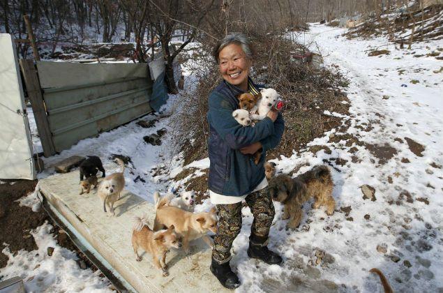 Sul-coreana de 61 anos salva cães de virarem comida