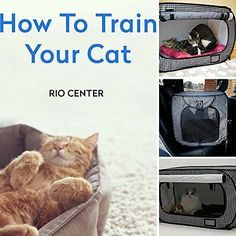 Cat Portable Travel Crate and EBOOK HOW TO TRAIN YOUR CAT BY RIO CENTER,Light-Weight Small Pet Carrier,Feline Car Kennel Cage,Cat Boarding,Pet Walking Business,House Kitty.