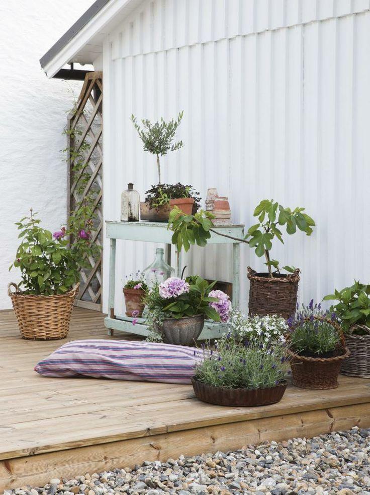 Sydlandsk: en gruppe med oliventrær og blomster i krukker skaper ...
