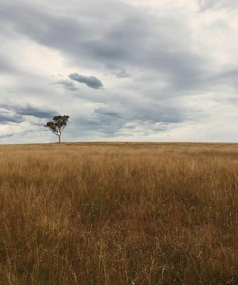 The incredibly beautiful countryside of the Glen Innes Highlands. Photo by @highlandergrounds   Friday's forecast for the Glen Innes Highlands includes a maximum temperature of 22 degrees with the chance of afternoon showers.