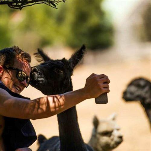 (Troy Brosnan) Getting kisses from my new Alpaca friend!  #destinationtrail #Australia #Tasmania  @damianbreach #northeasttasmania #ridebluederby