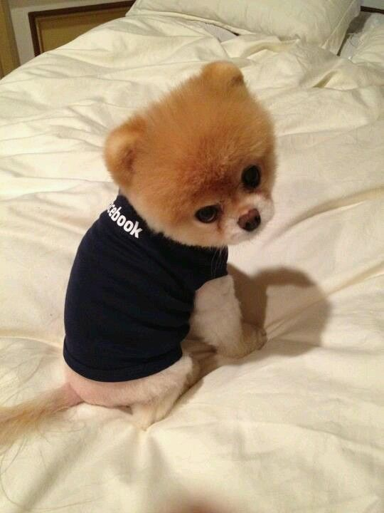 Boo the dog, this is too much, that's all I have to say