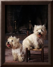 Two West Highland Terriers /Westies