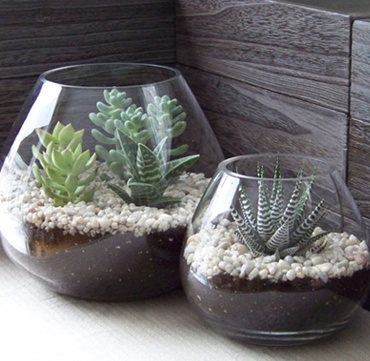 DIY Terrariums! All it takes is a quick trip to Home Depot and a small amount of assembly. Maybe use for table center piece
