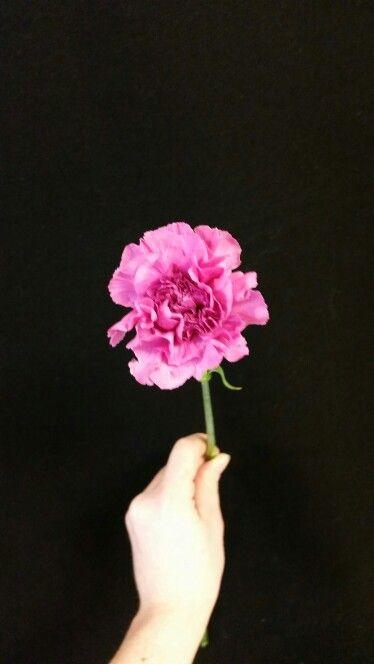 Mørk rosa