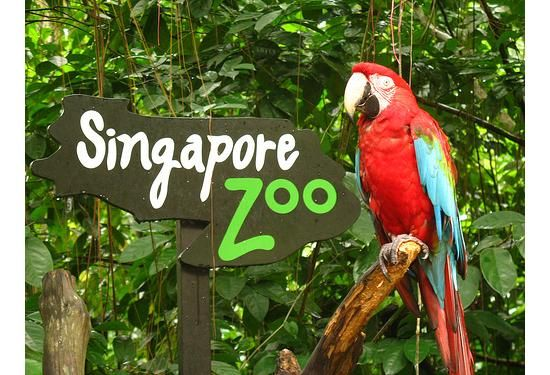 Singapore Zoo, probably among the best zoo in the world a must see.