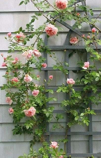 Rose trellis // WE COULD PUT A BEAUTIFUL TRELLIS ON THE WALLLLLLLLLL. #nurseryideas