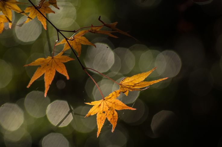 Enjoy autumn colors . by Hidemi Katayama on 500px