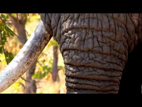 Very nice video made by SNP Natuurreizen about Sefapane and surroundings. #SefapaneMagic