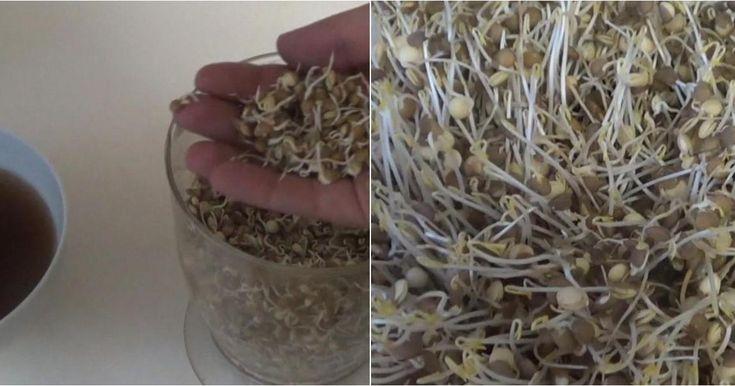 Cómo hacer enraizante con lentejas: ¡receta ultranovedosa y efectiva!