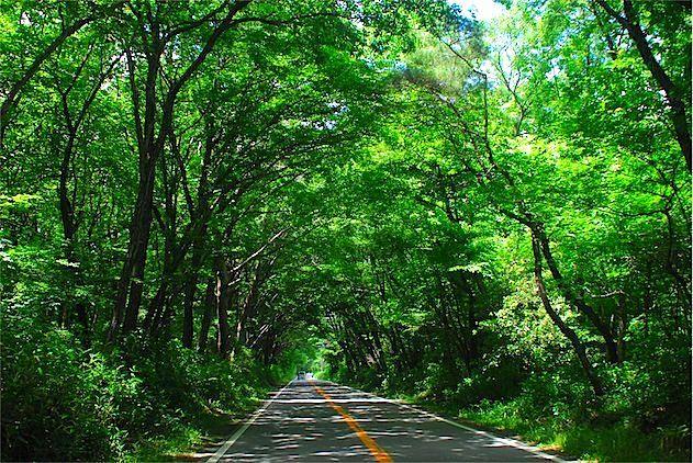 県道17号那須高原線(那須街道)
