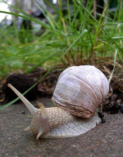 Un escargot de Bourgogne. By Per Ola Wiberg #yonne #bourgogne #slow