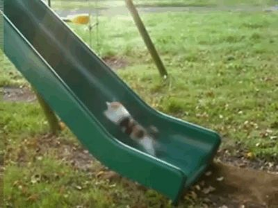 This cat who's going nowhere fast. | 37 Animals Who Failed So Spectacularly They Almost Won