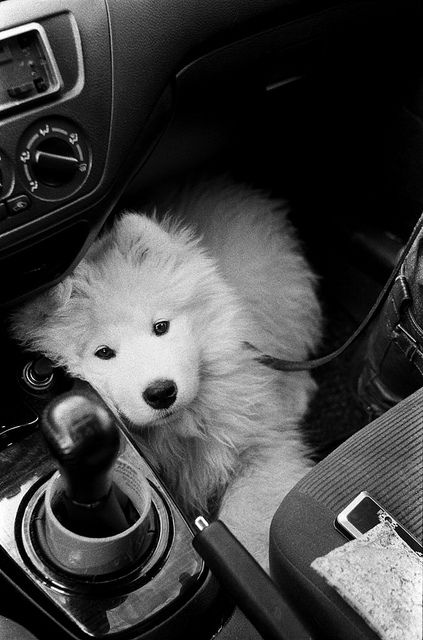 I wouldn't mind driving around with this little guy! :)