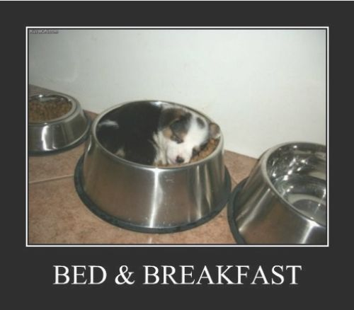 This is too cute not to pin!Breakfast In Beds, Puppies, Dogs, Beds And Breakfast, So Cute, Food, Naps Time, Funny Animal, Bowls