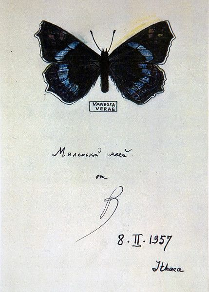 """VLADIMIR NABOKOV, BUTTERFLY DRAWING 1957: """"made on title pages of various editions of his works as a gift to his wife and son"""""""