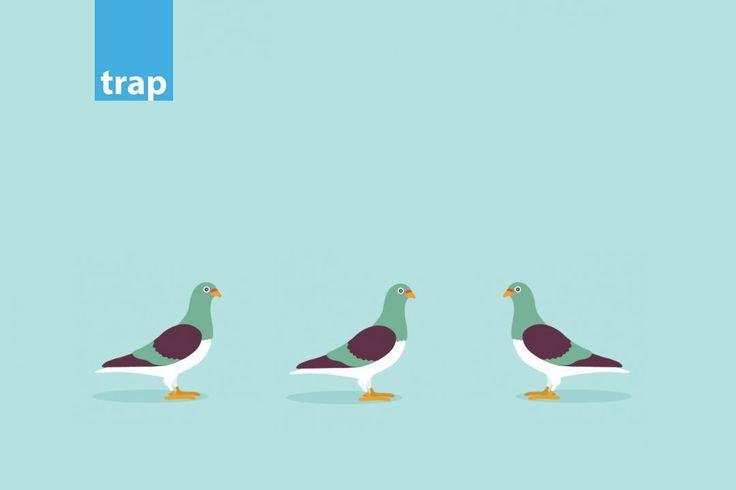 prostasia-apo-peristeria-trap.jpg (1080×720)