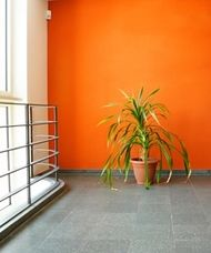 Southern Gold Coast Painting Service