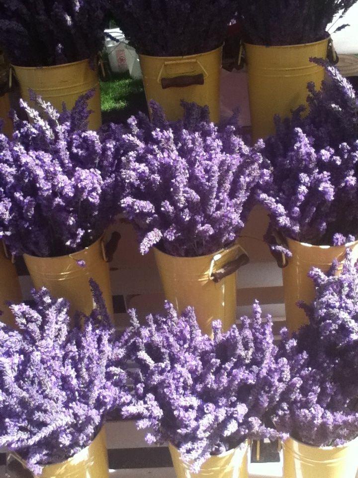 Lavender 2013 Farmers Market Lavanta Pinterest The