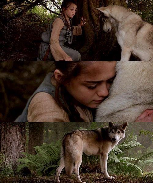Arya Stark's direwolf Nymeria