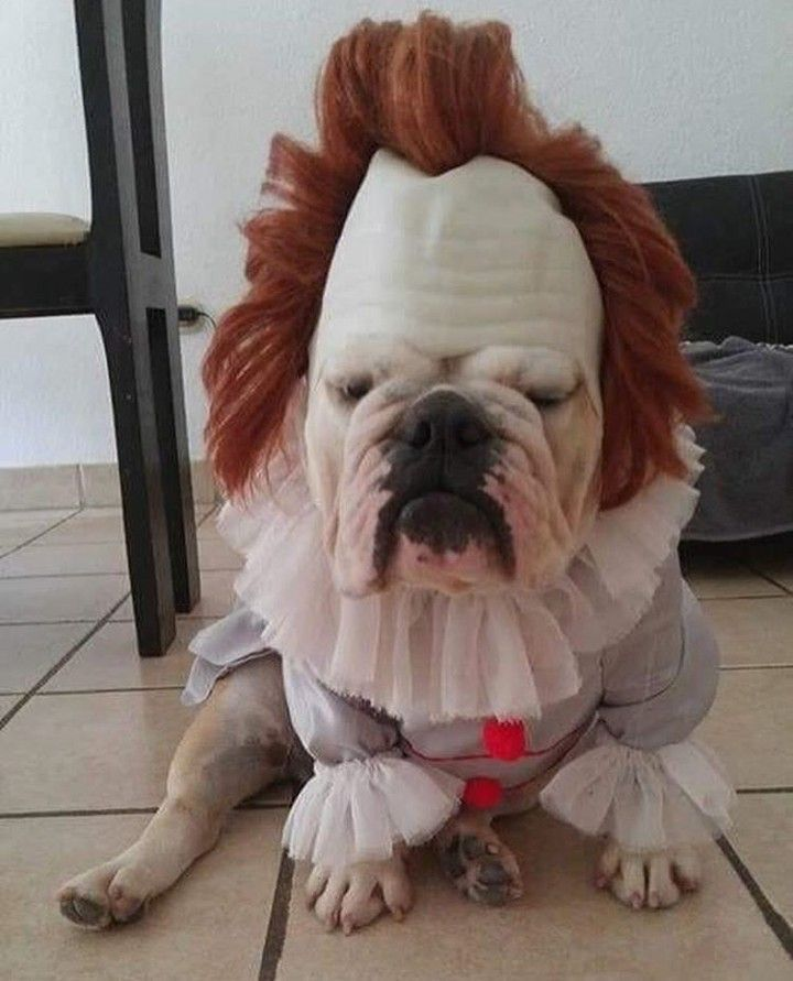 Funny Dog Cosplay It Pennywise Grippe Sou Horror