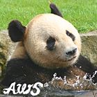 "Save the pandas ~lisa. ""永明(えいめい) @ アドベンチャーワールド, Japan"""